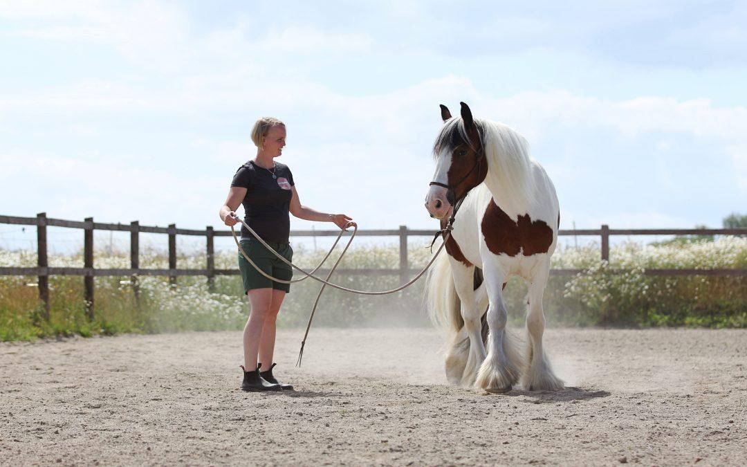 Styrk din hests nervesystem
